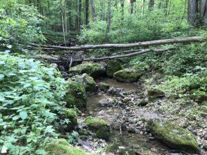 Flintrock Trail